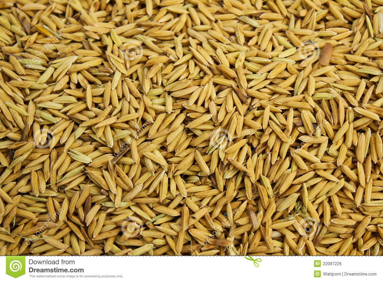 Rice seed for planting - Rice Seed Background Royalty Free Stock Image Image 22087226