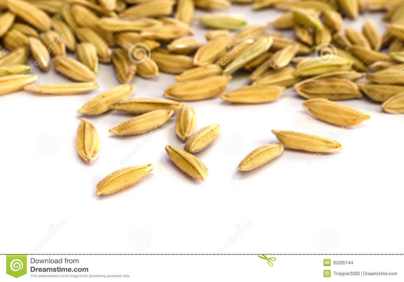 Rice seed for planting - Rice Seed Stock Images Image 35205144