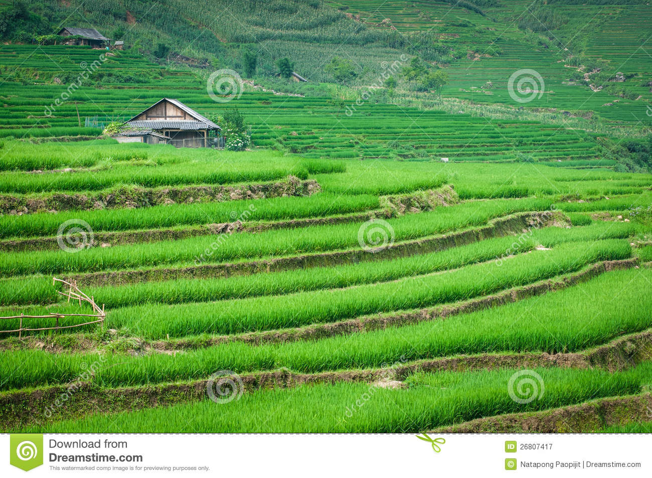 Rice step terrace in vietnam stock image image 26807417 for Terrace steps