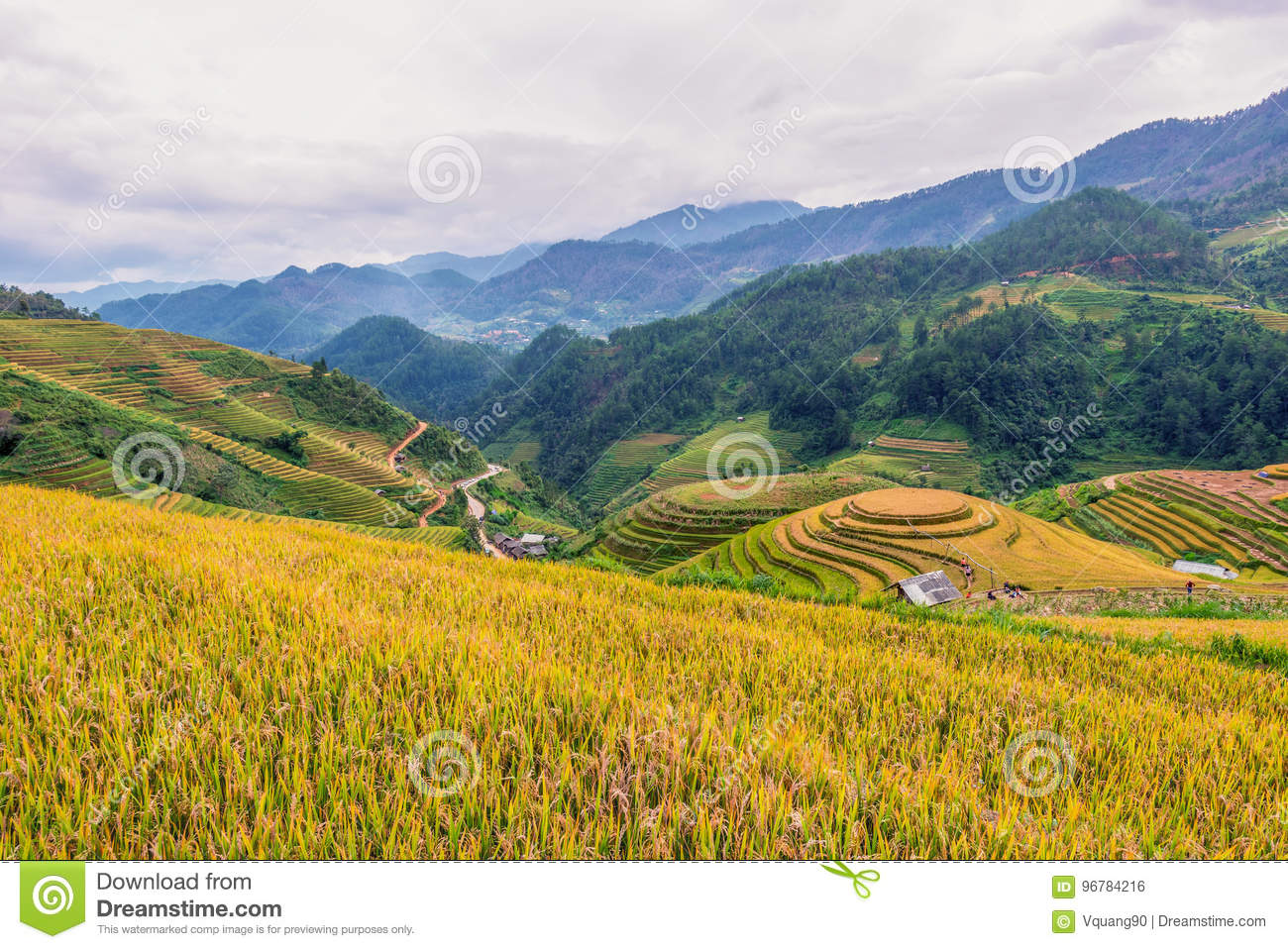 Rice terrace of Mu Cang Chai, Yenbai, Northern Vietnam