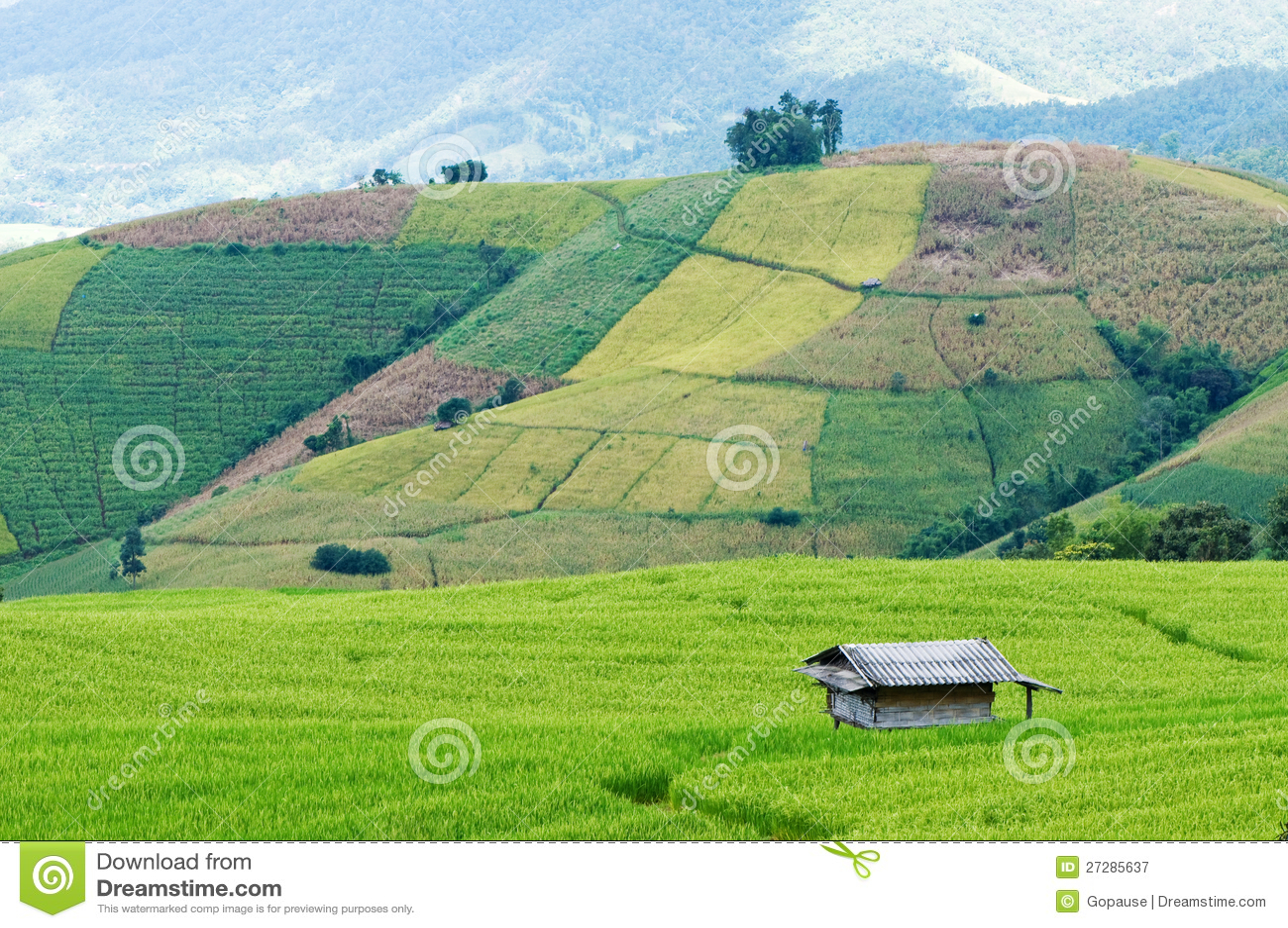 Ricefält