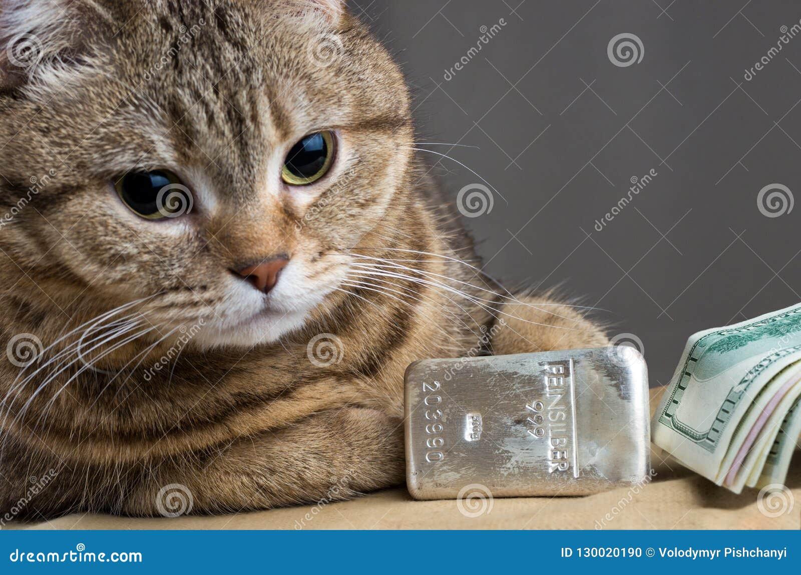 A rich cat. Cat`s head near the silver bullion and cash dollars
