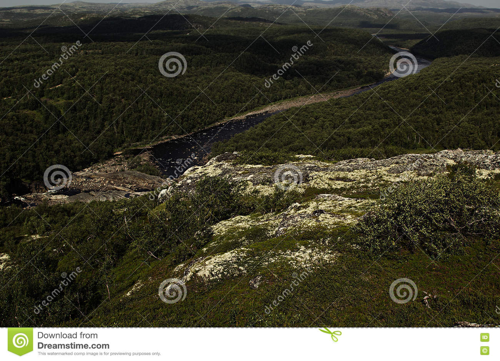 Tundra Soft Top >> Rich Green Moss And Small White Flowers. Stock Photo | CartoonDealer.com #584262
