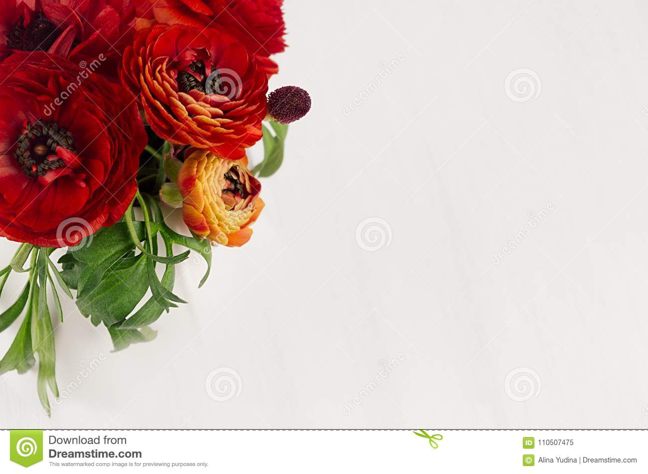 Rich red buttercup flowers with green leaves top view on soft white wooden table. Elegance spring bouquet.