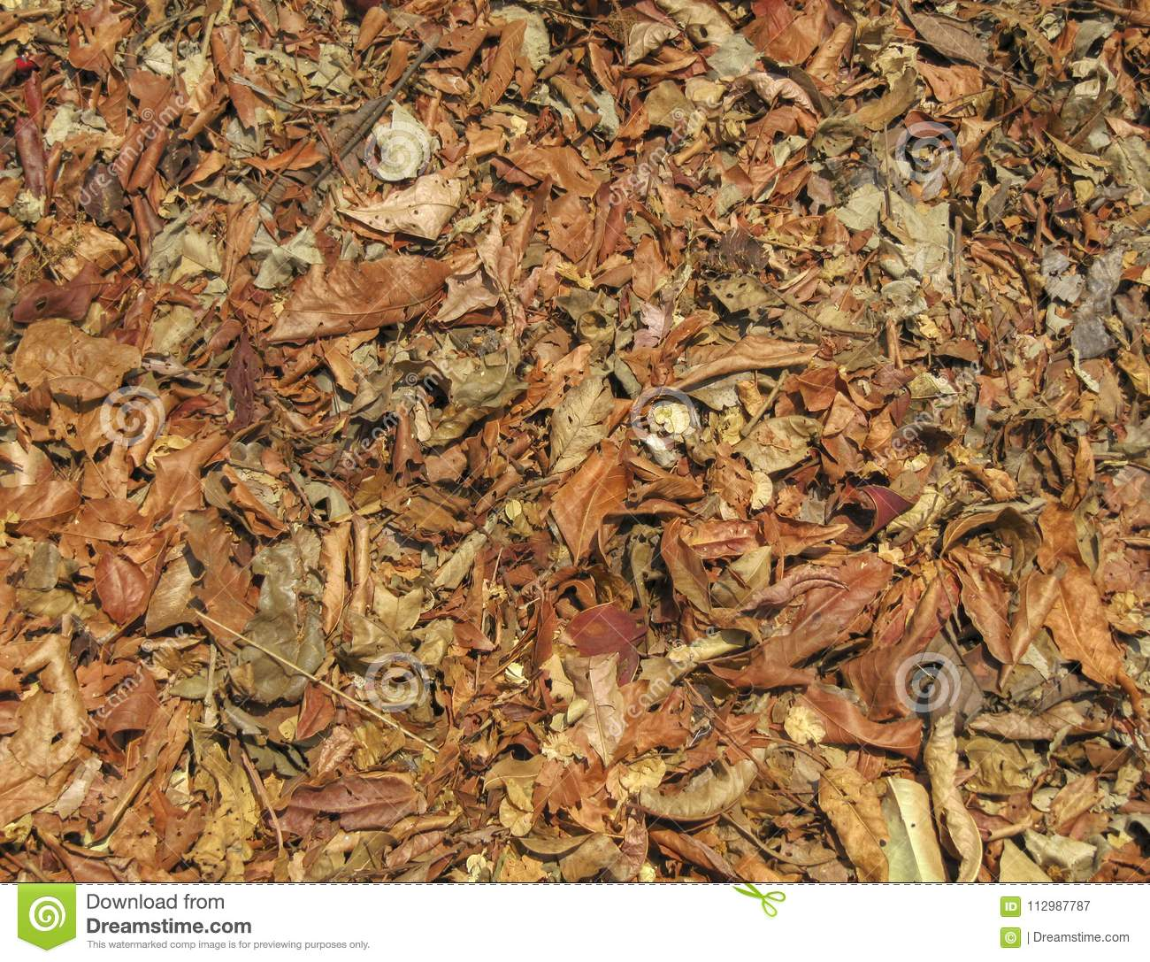 Richly coloured fallen forest leaves