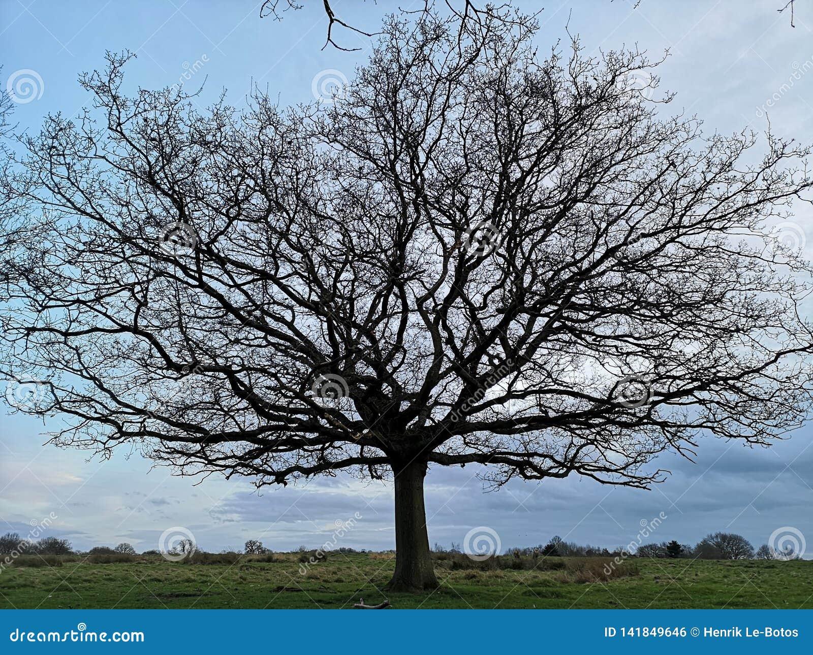 Richmond Park, London, Vereinigtes K?nigreich