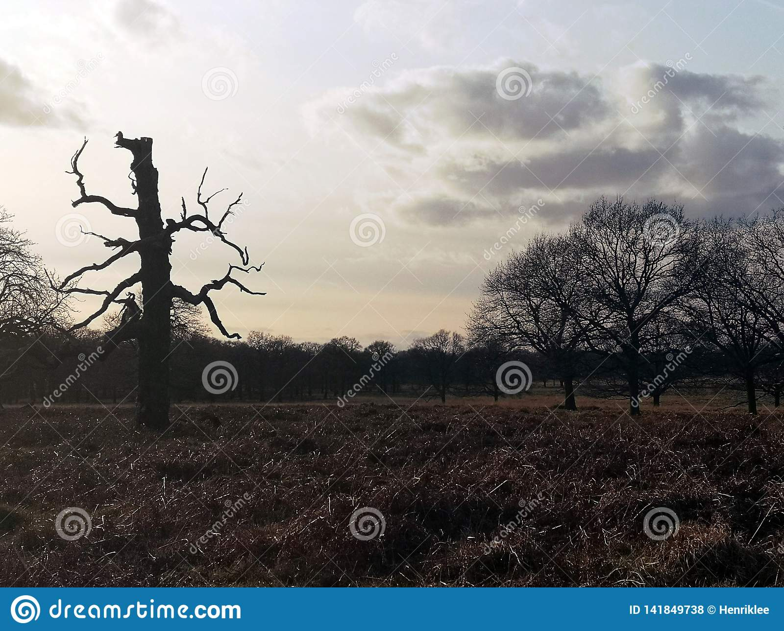 Richmond Park, Londres, Royaume-Uni
