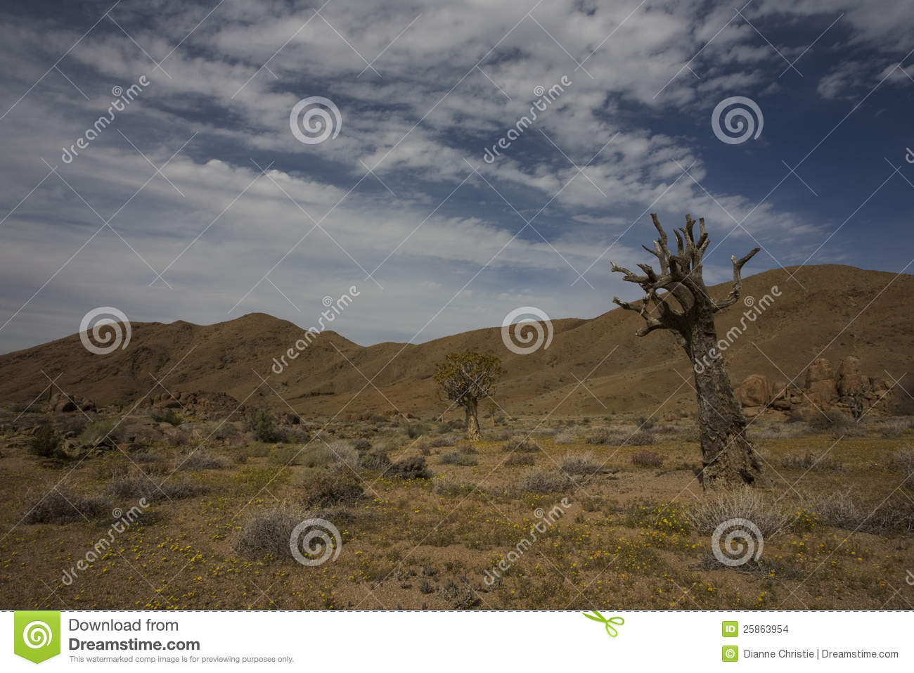 Richtersveld nationalpark, South Africa.