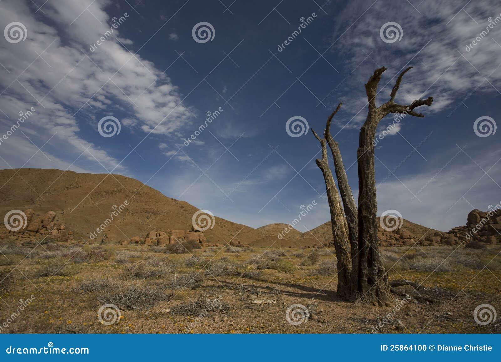 Richtersveld nationalpark, South Africa.