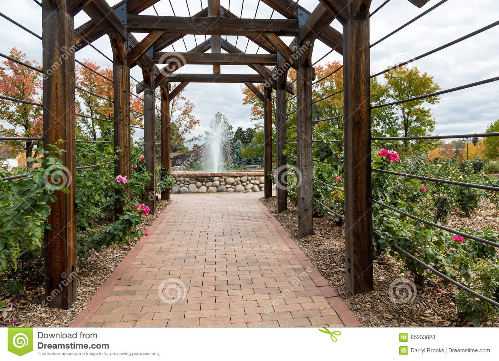 Rick Walkway Under Rose Trellis Stock Image Image Of