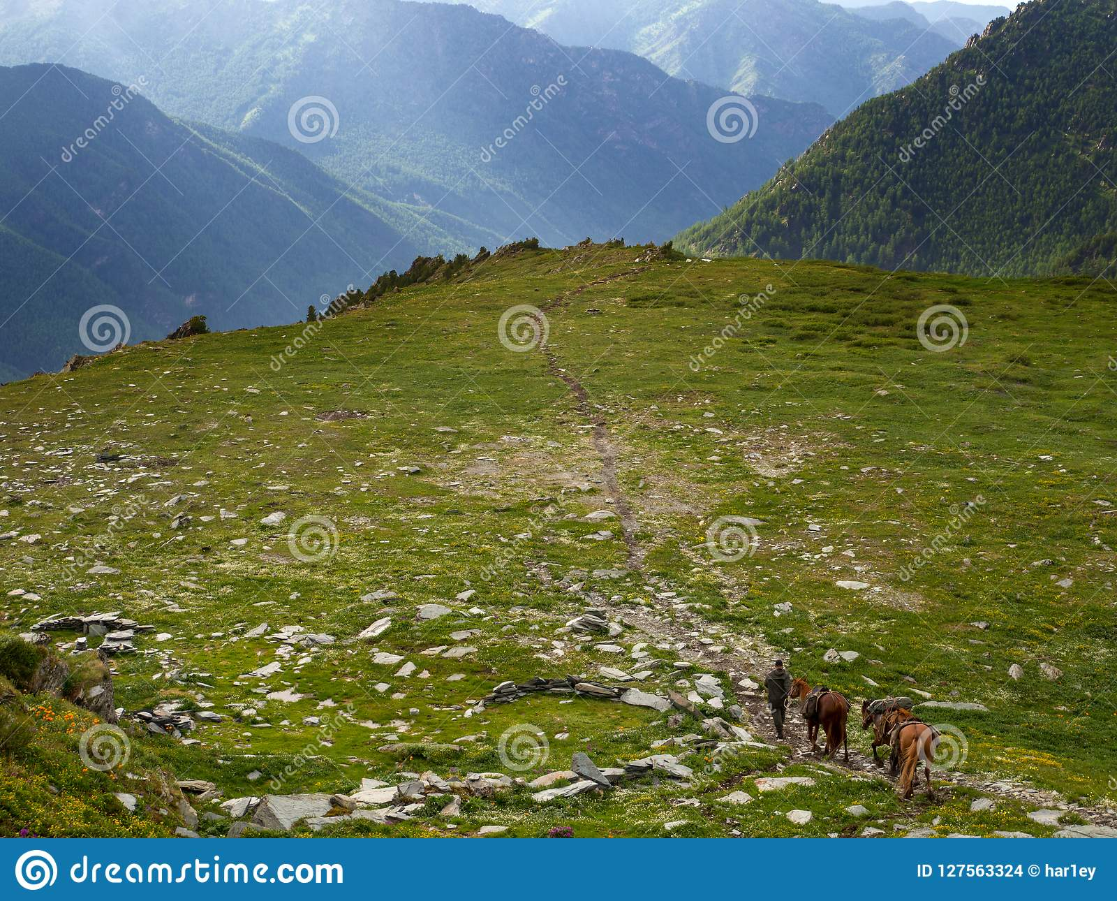 A rider with three horses walks along the path to the mountains.