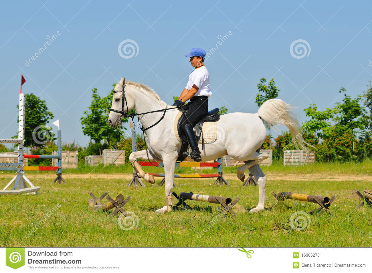 Rider On White Arabian Horse Stock Image Image Of Mare Outdoor 16306275