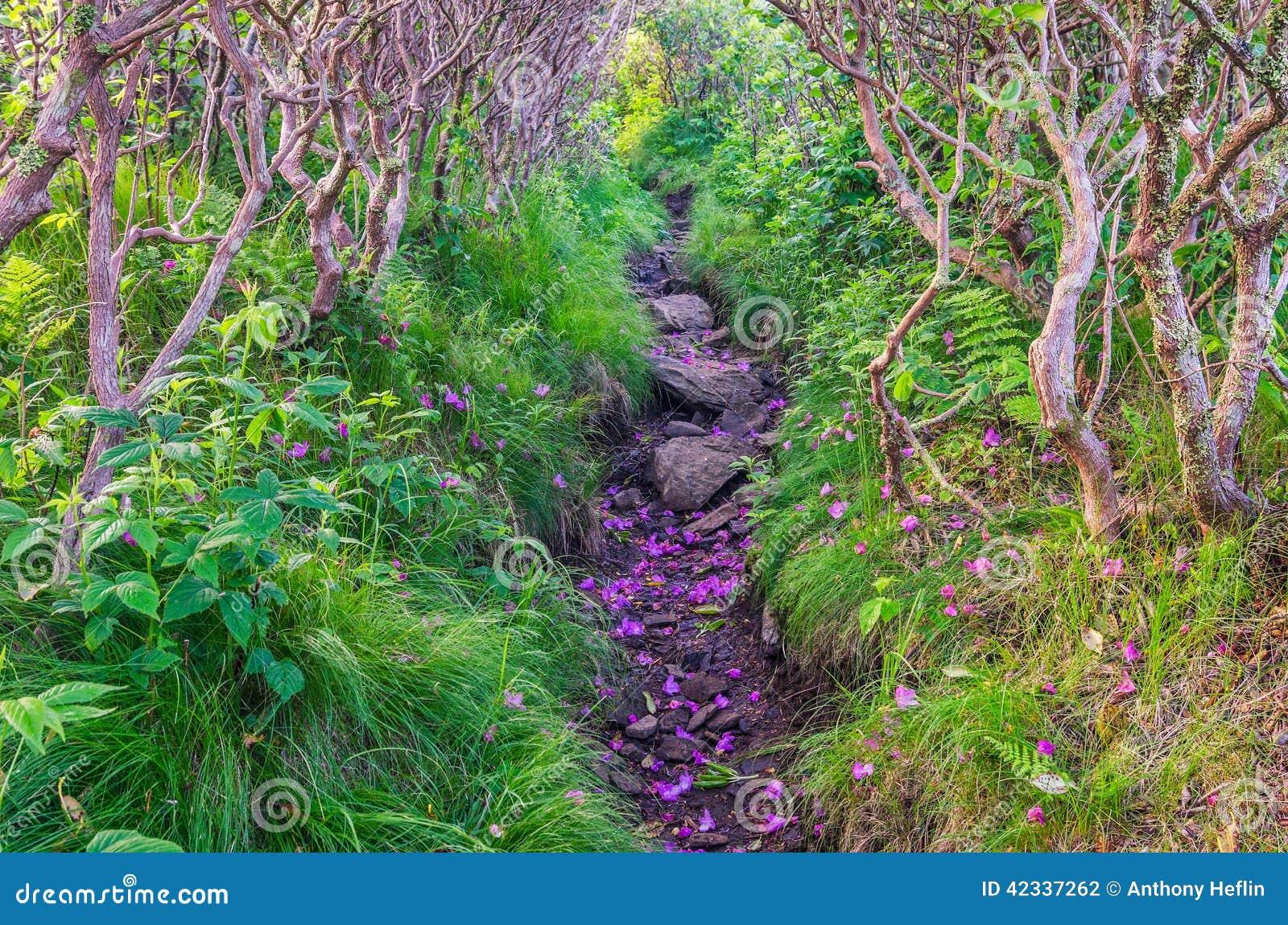 Ridge herboso, rododendro del Catawba, Roan Mountain State Park