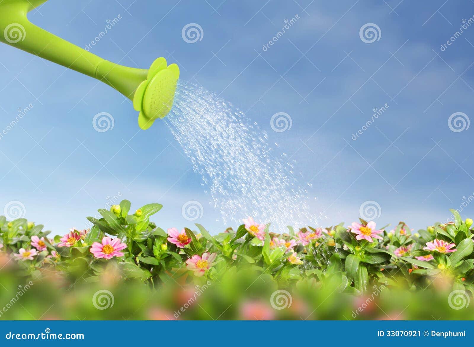 Riegue la regadera de colada sobre la floración la flor