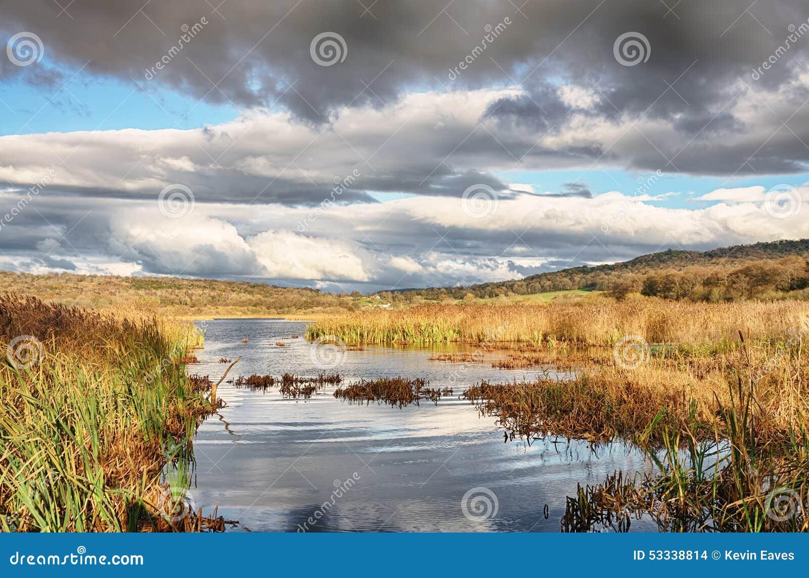 Riet en water in Leighton Moss, Lancashire