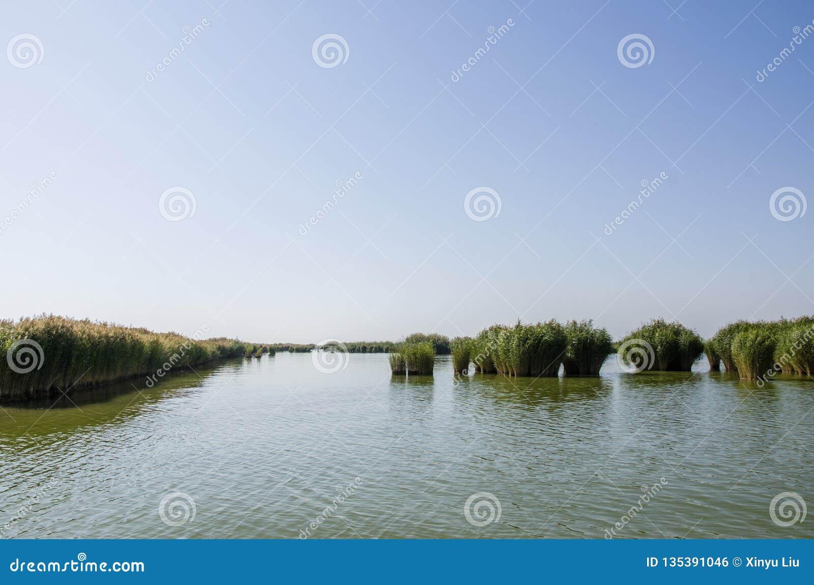 Riet in het meer