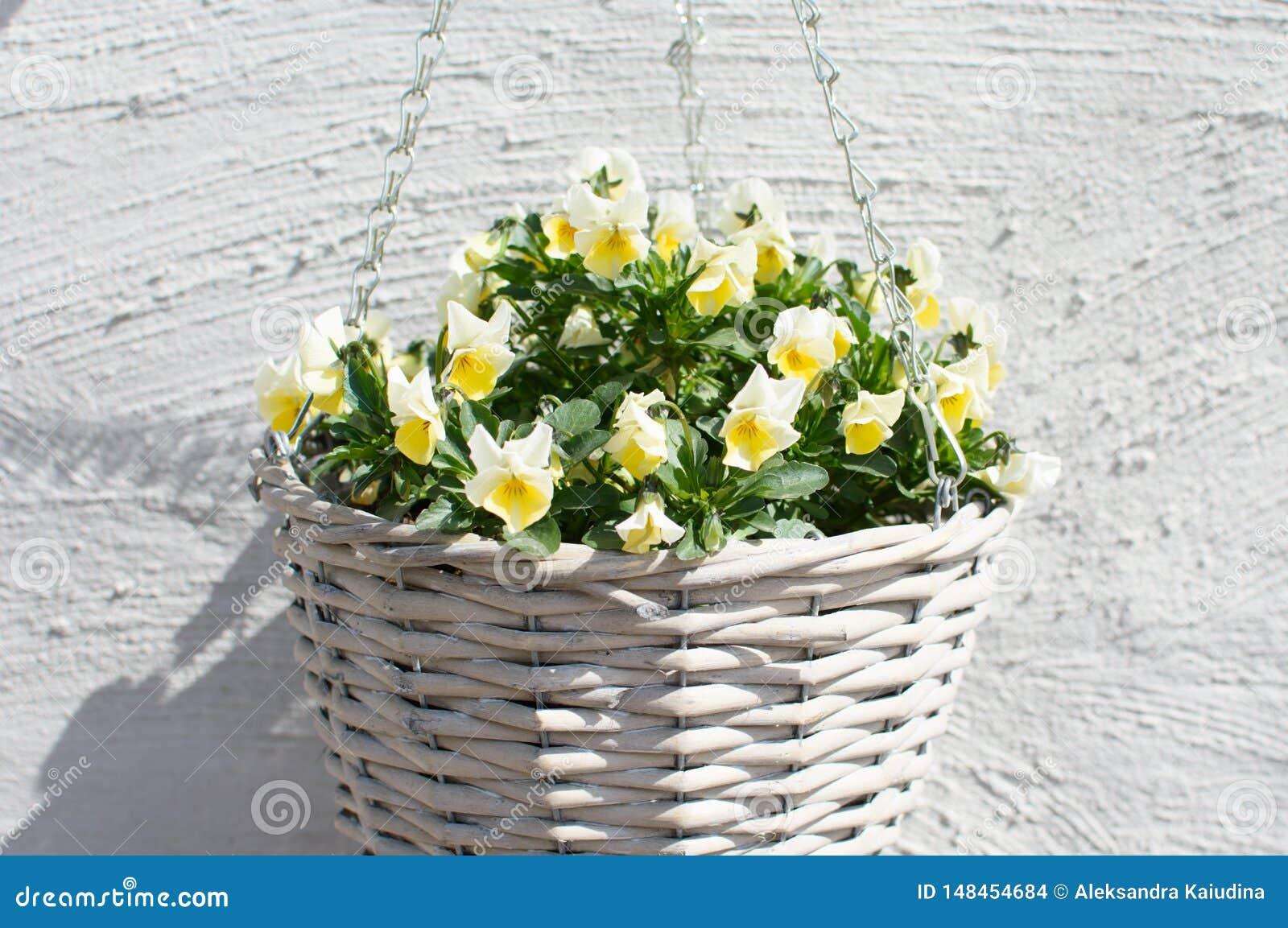 Rieten pot met gele bloem