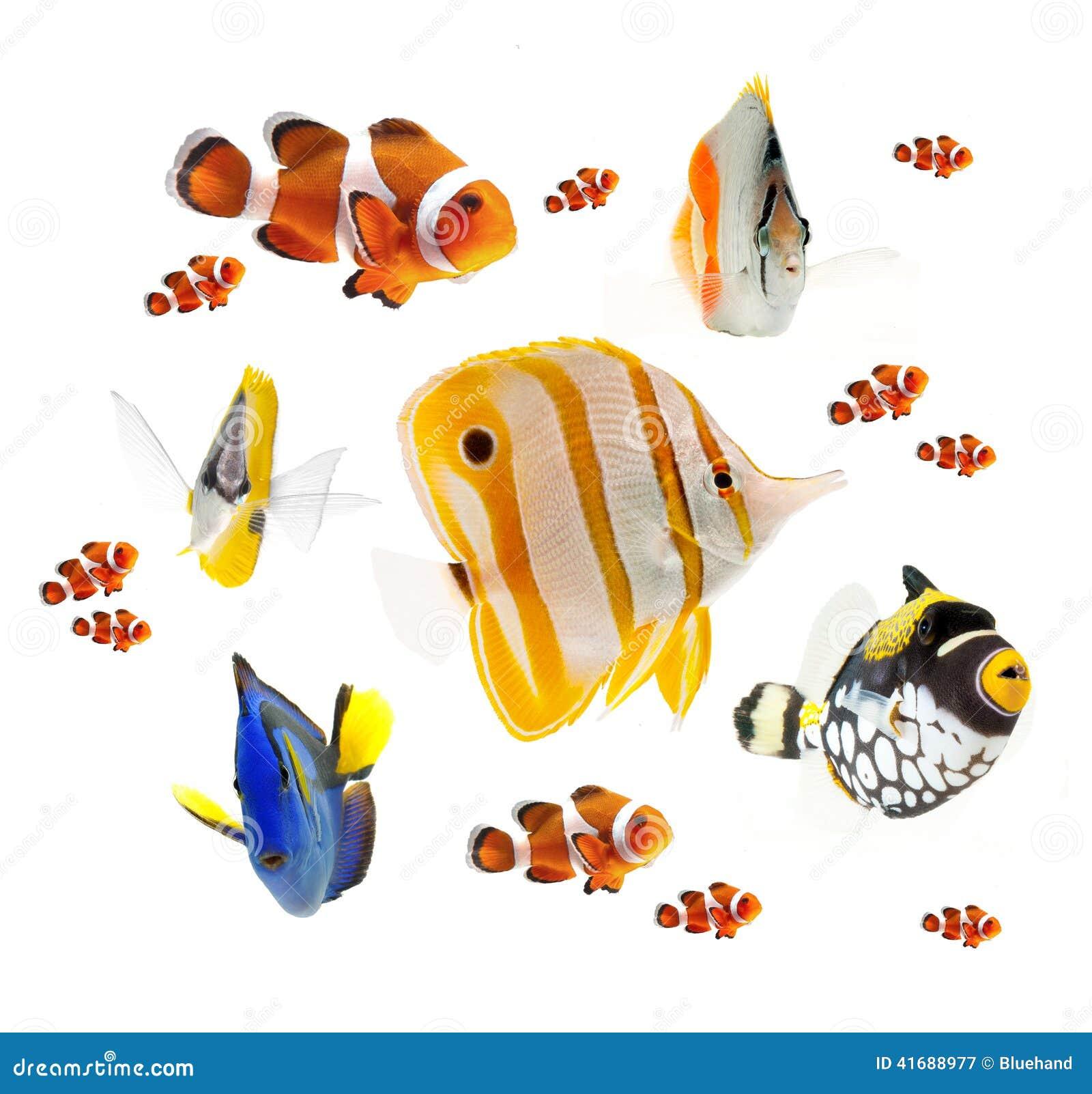 Riff-Fischsammlung des Sommers tropische lokalisiert auf weißem Hintergrund