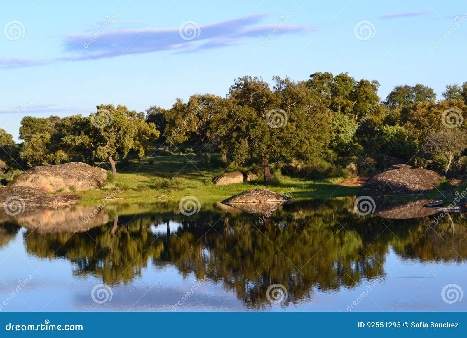 Riflessione degli alberi