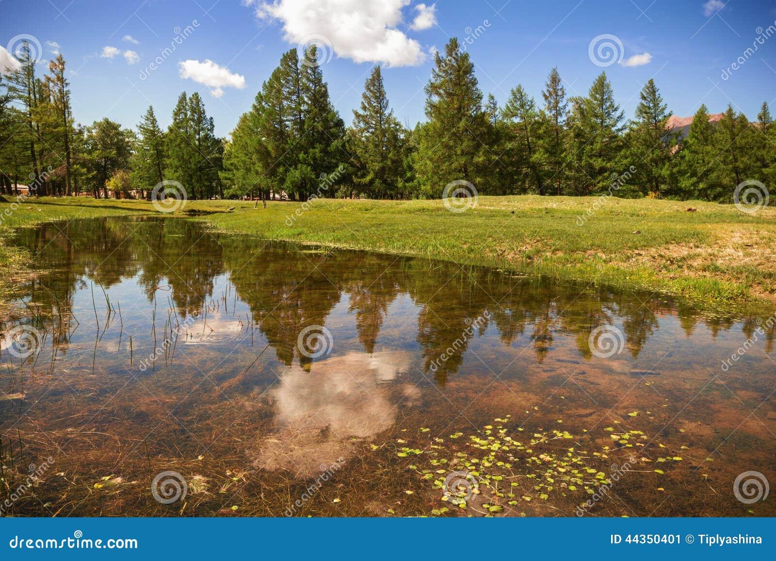 Riflessione degli alberi in The Creek