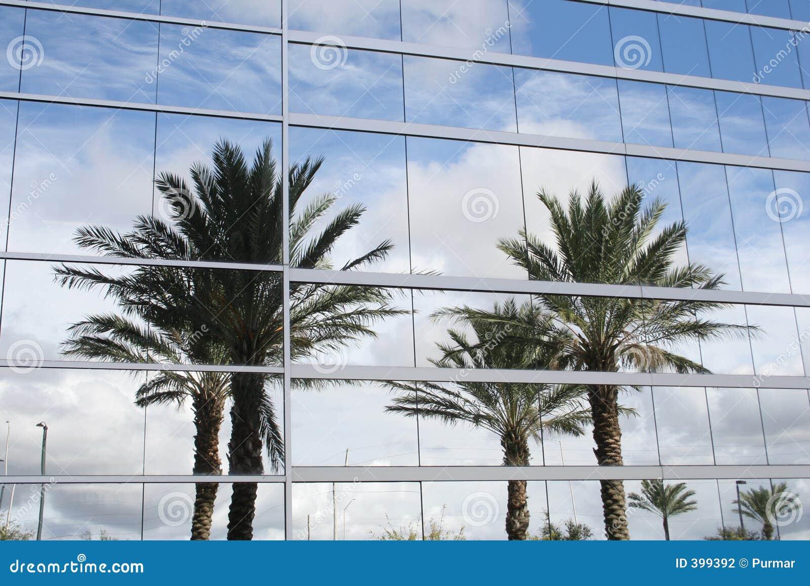 Riflessione delle palme