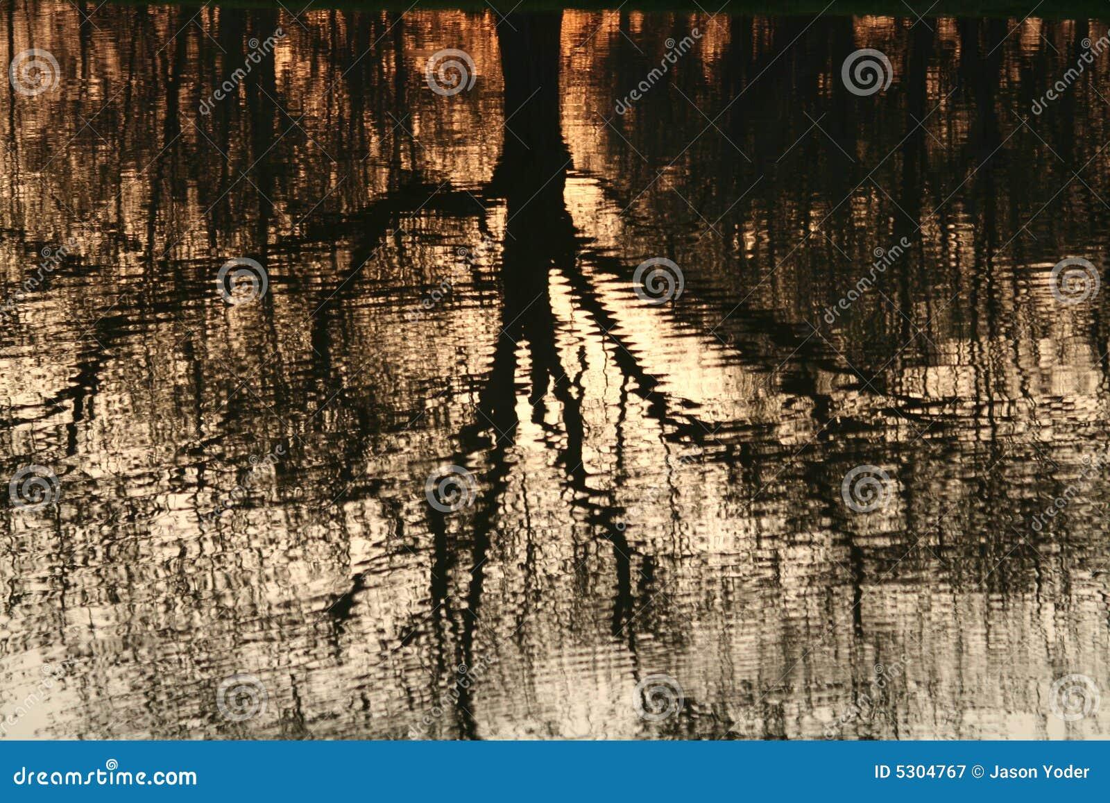 Download Riflessione Di Sera In Stagno Immagine Stock - Immagine di estate, lago: 5304767