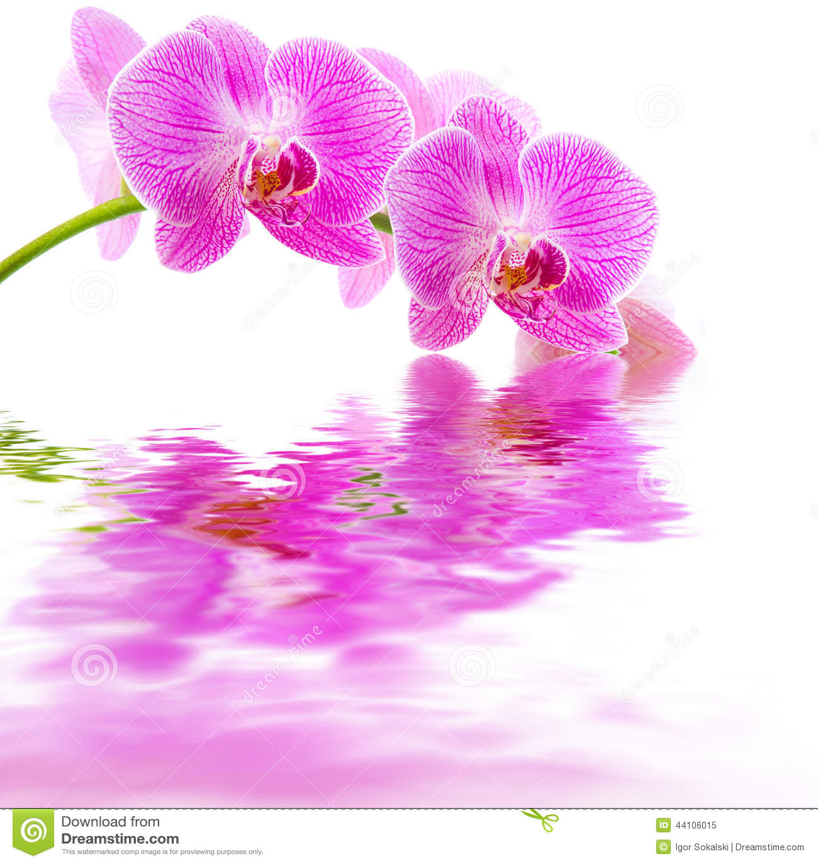 Riflessione rosa dell 39 acqua dell 39 orchidea fotografia stock for Orchidea acqua