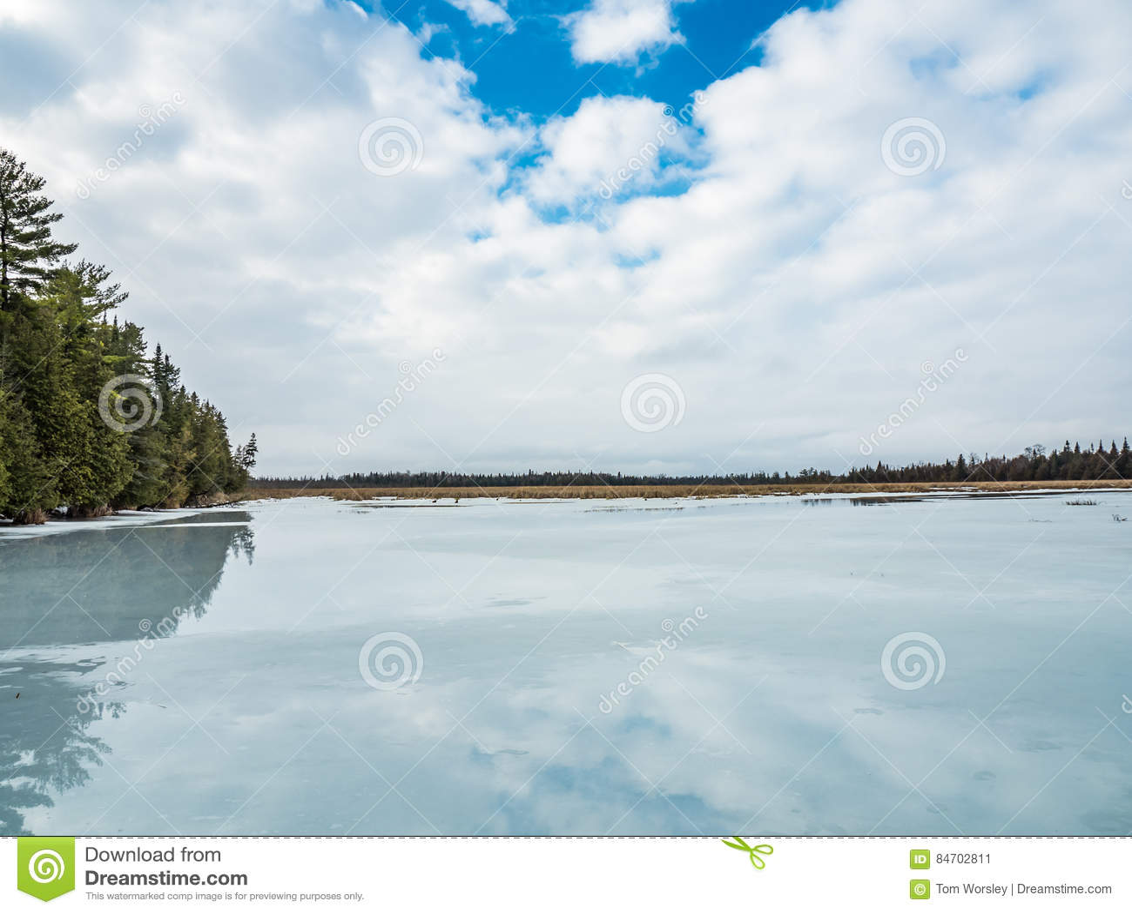 Riflessioni 5 Cedar Forest Beside Frozen Marsh di disgelo di inverno