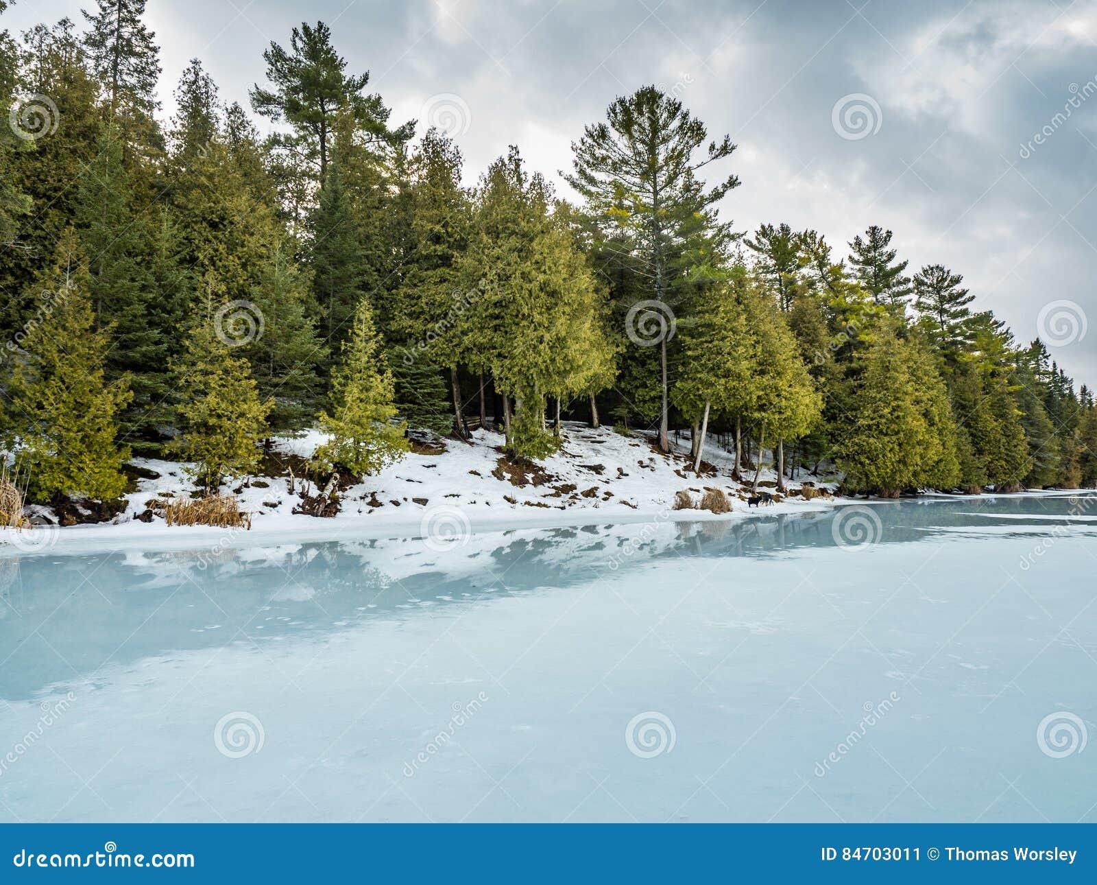 Riflessioni 6 Cedar Forest Beside Frozen Marsh di disgelo di inverno