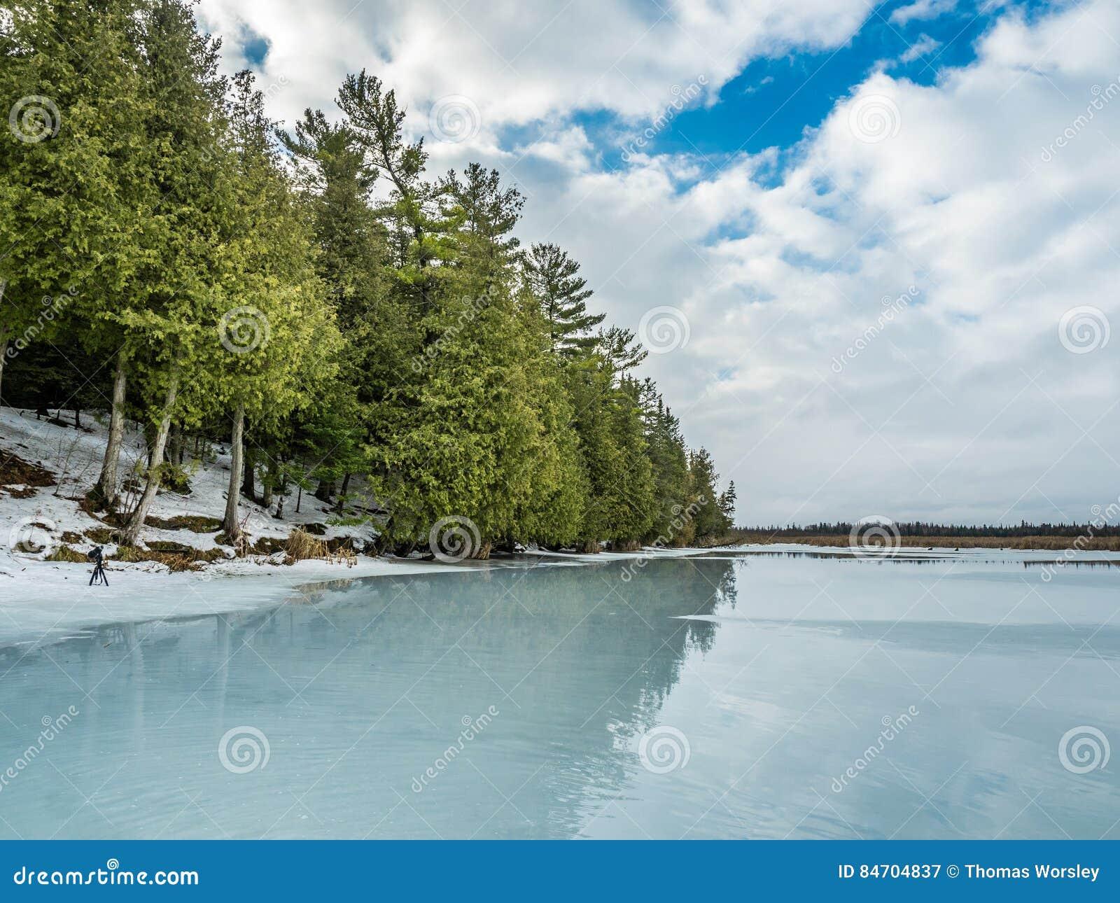 Riflessioni 9 Cedar Forest Beside Frozen Marsh di disgelo di inverno