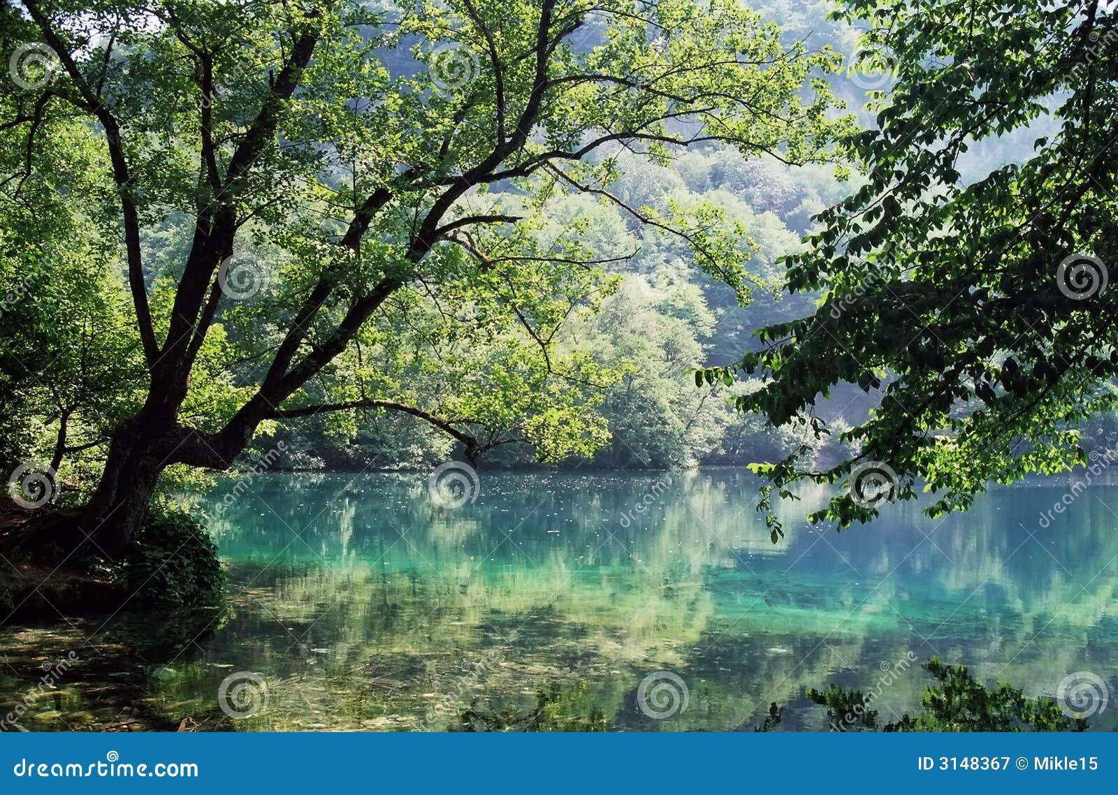 Riflessioni della foresta in lago