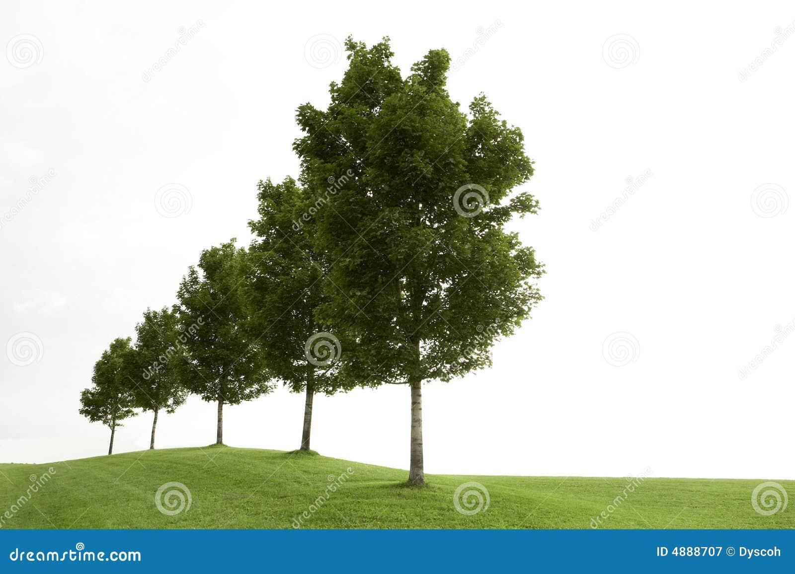 Riga degli alberi verdi