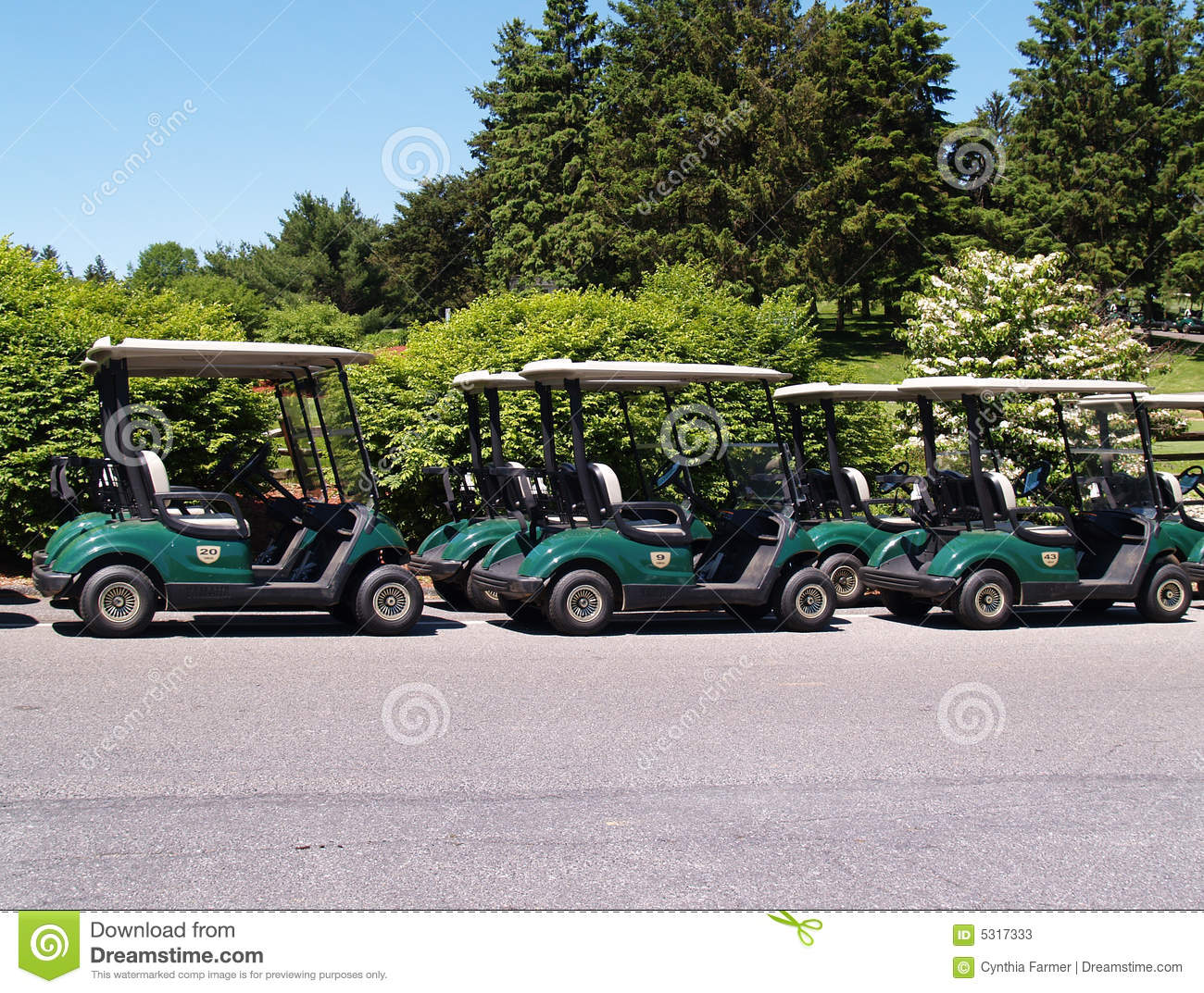 Download Riga dei carrelli di golf immagine stock. Immagine di buggy - 5317333