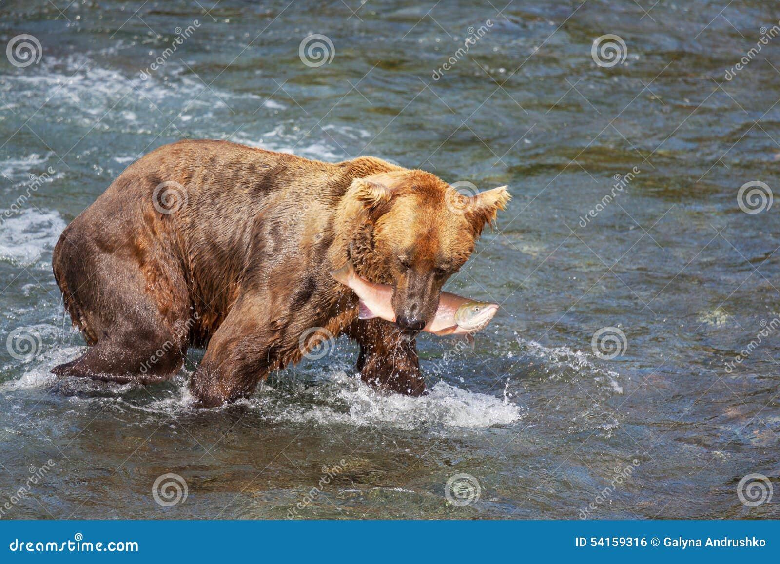 Riguardi l Alaska