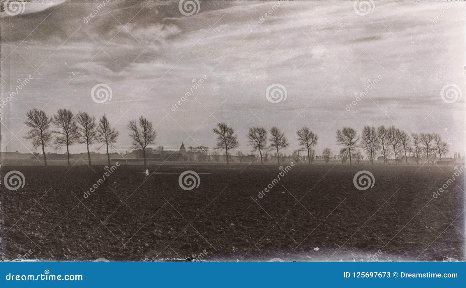 Rij van bomen op een bewolkte dag in een uitstekend landschap