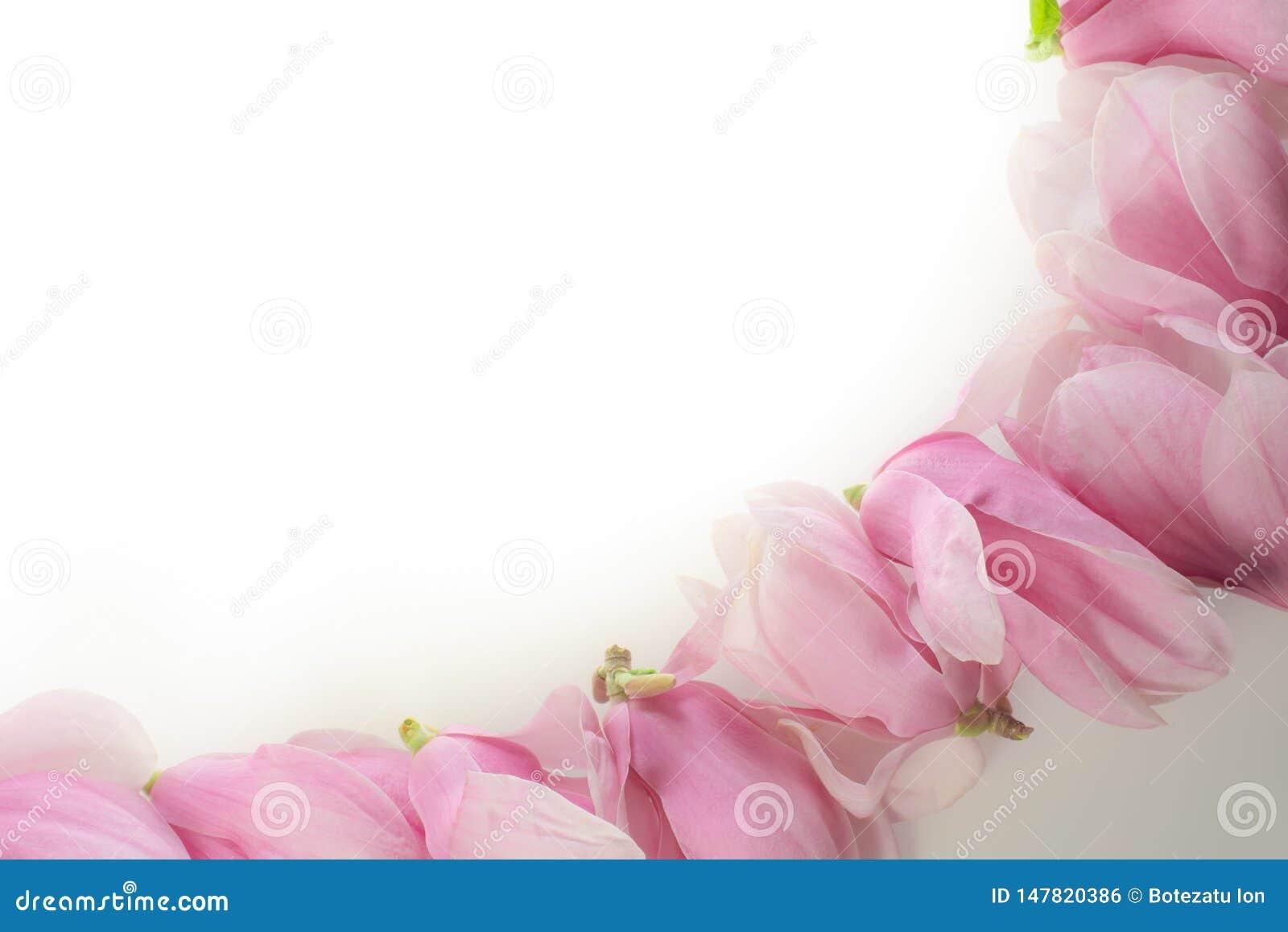 Rij van magnoliabloemen