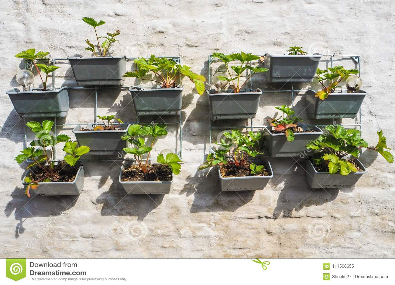 Verticale kruidentuin op kantoor deel tuin en balkon