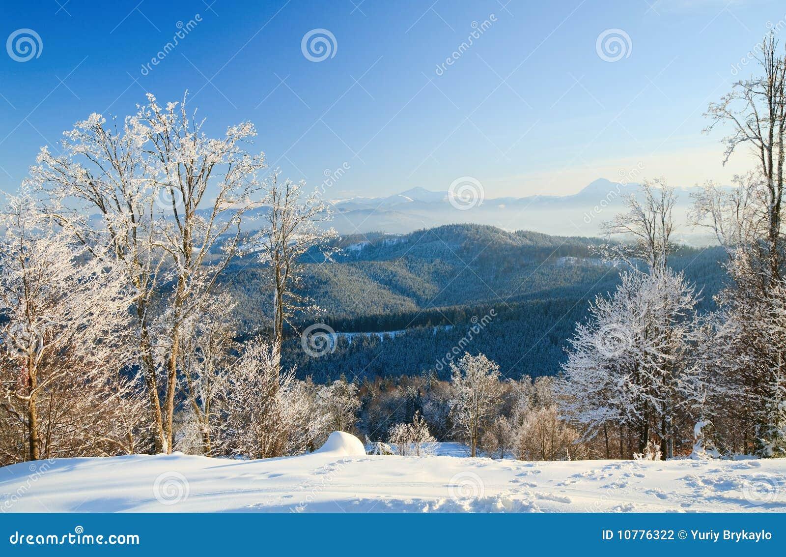 Rijp behandelde bomen in de winterberg