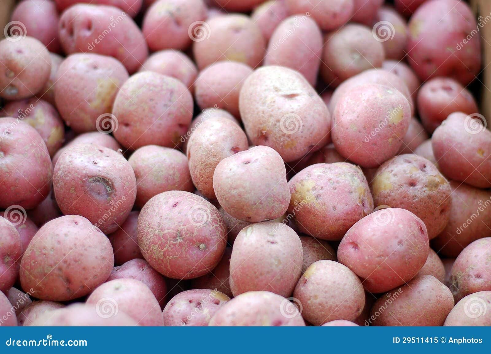Rijpe aardappels
