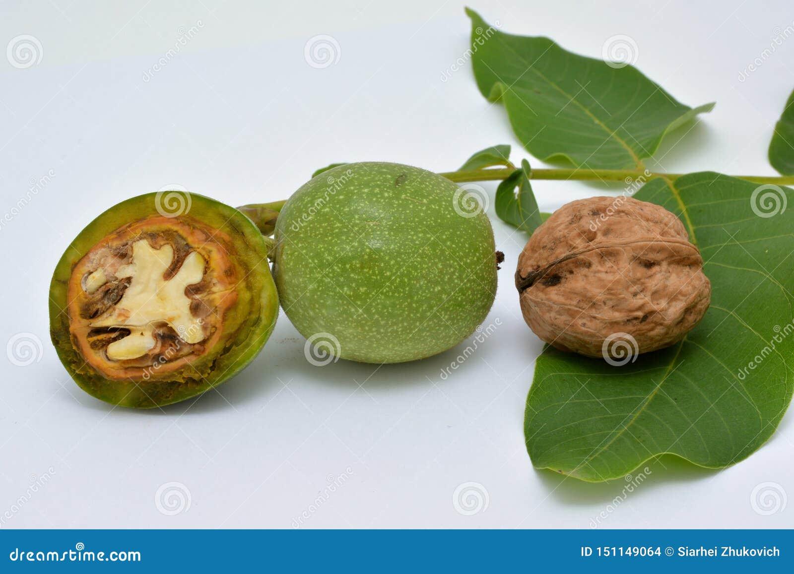 Rijpe en ontlede groene okkernoten met bladeren