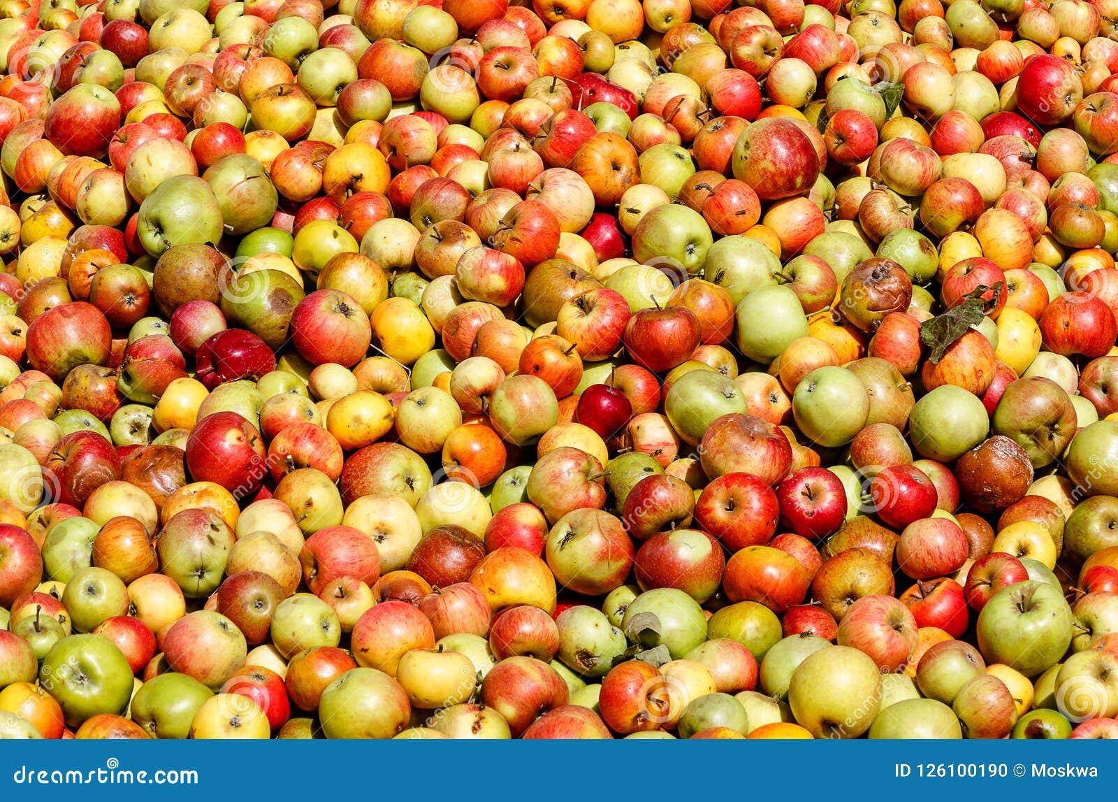 Rik äppleskörd - äpplebakgrund