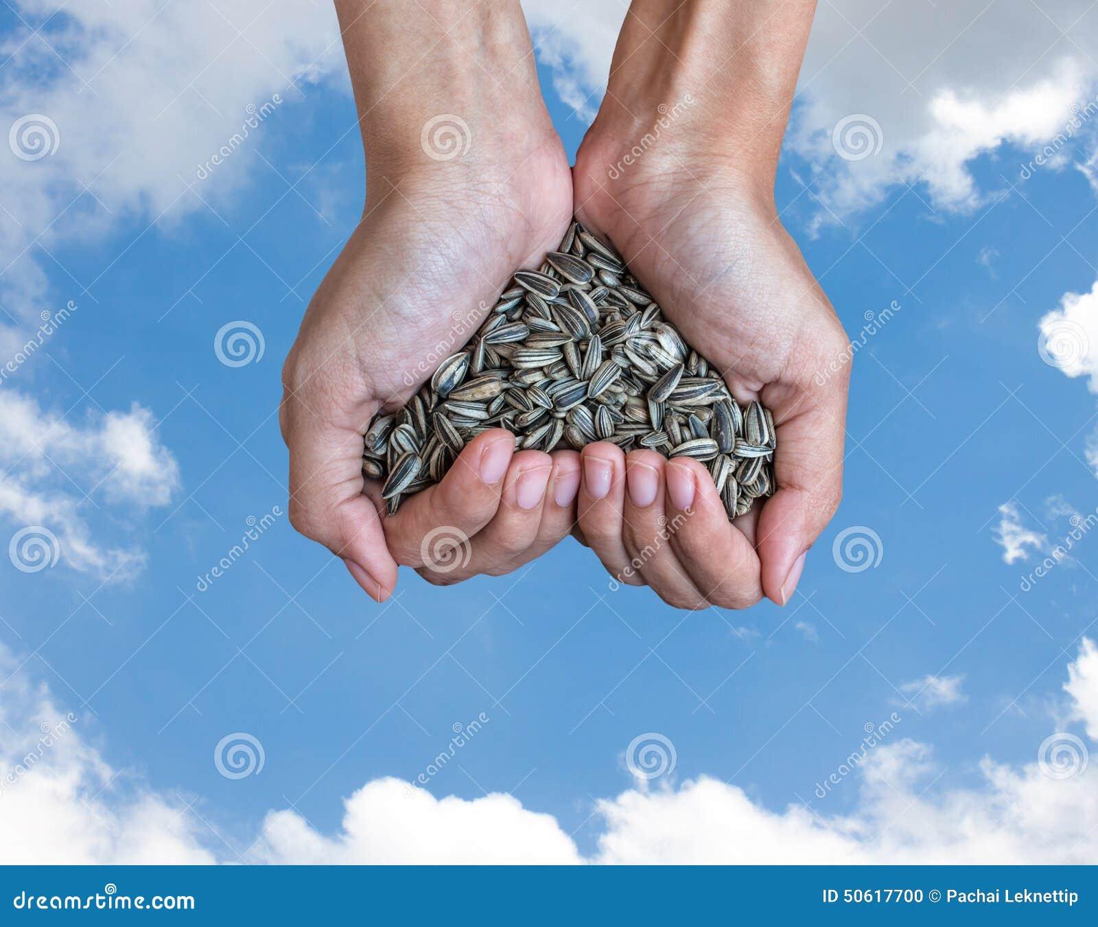 Rikt solrosfrö för handfull (hjärtaform)