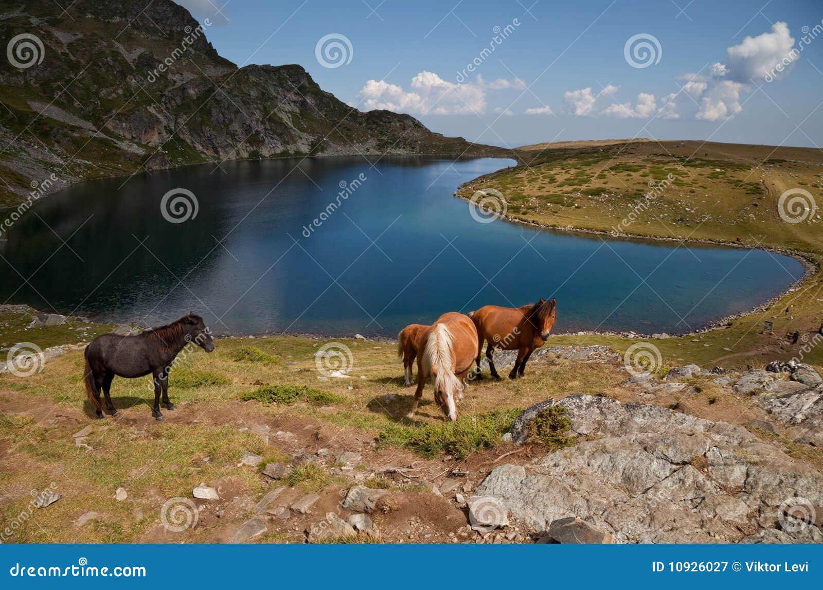 Rila гор озера лошадей