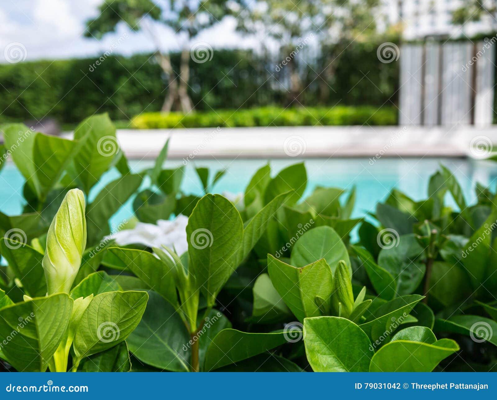 Rilassi in bei giardino e stagno fotografia stock for Stagno in giardino