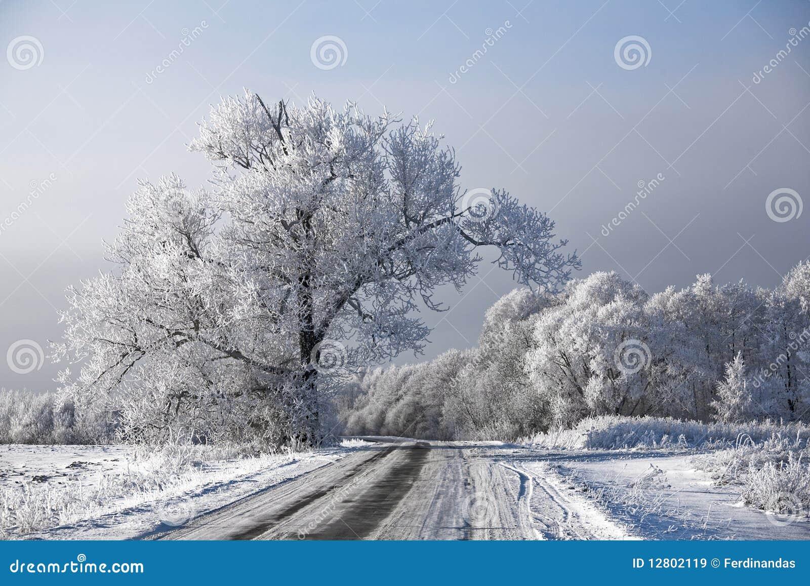 Rime geado paisagem das árvores da estrada do inverno