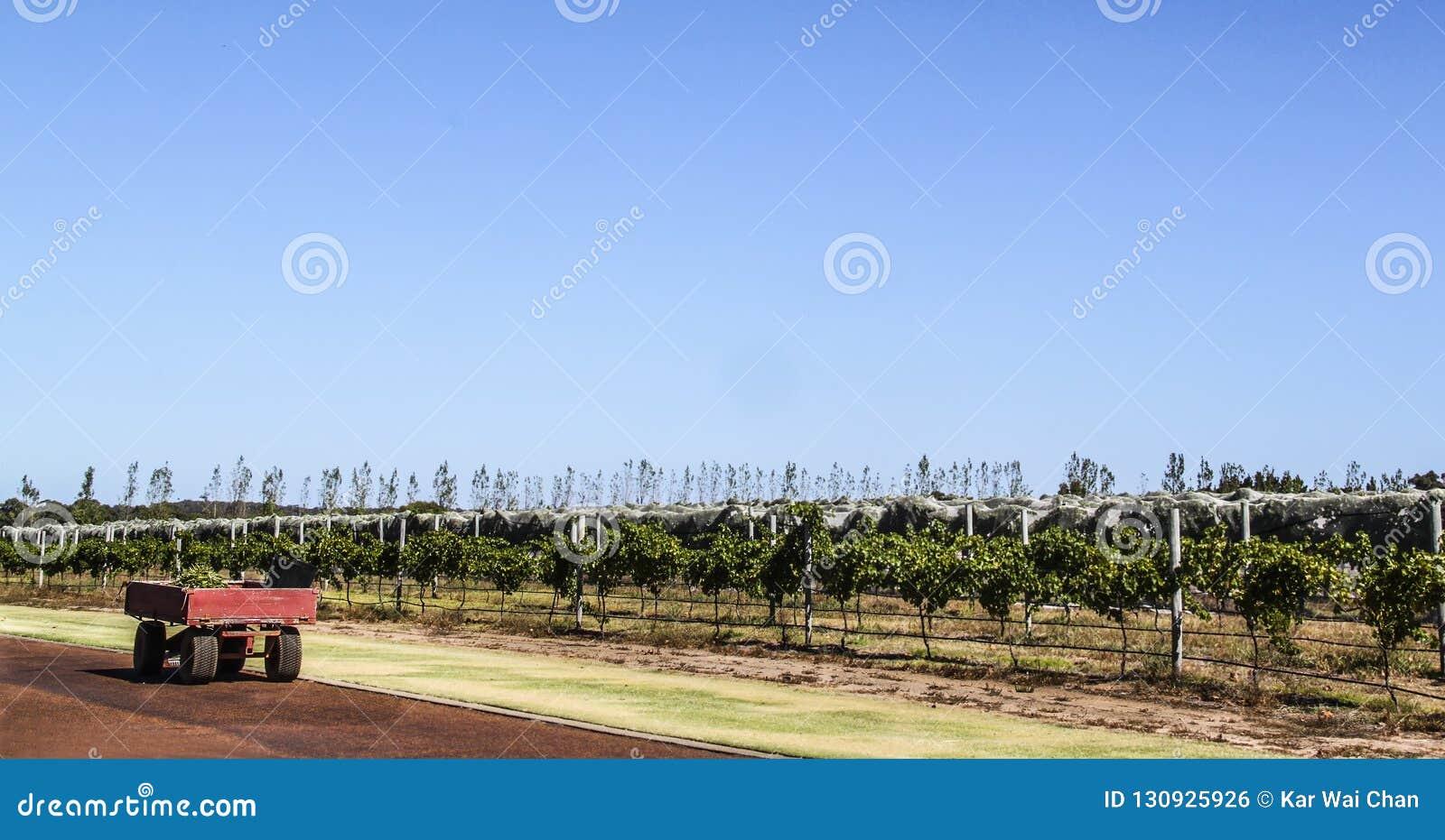 Rimorchio dell azienda agricola accanto ad una piantagione