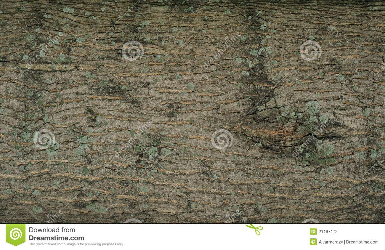 Rind background with moss
