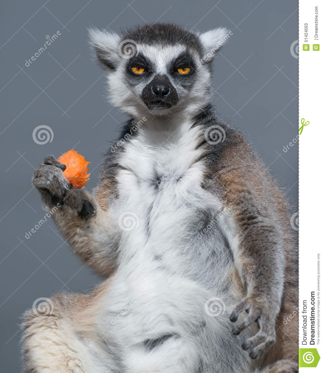 Ring Tailed Lemur och lunch