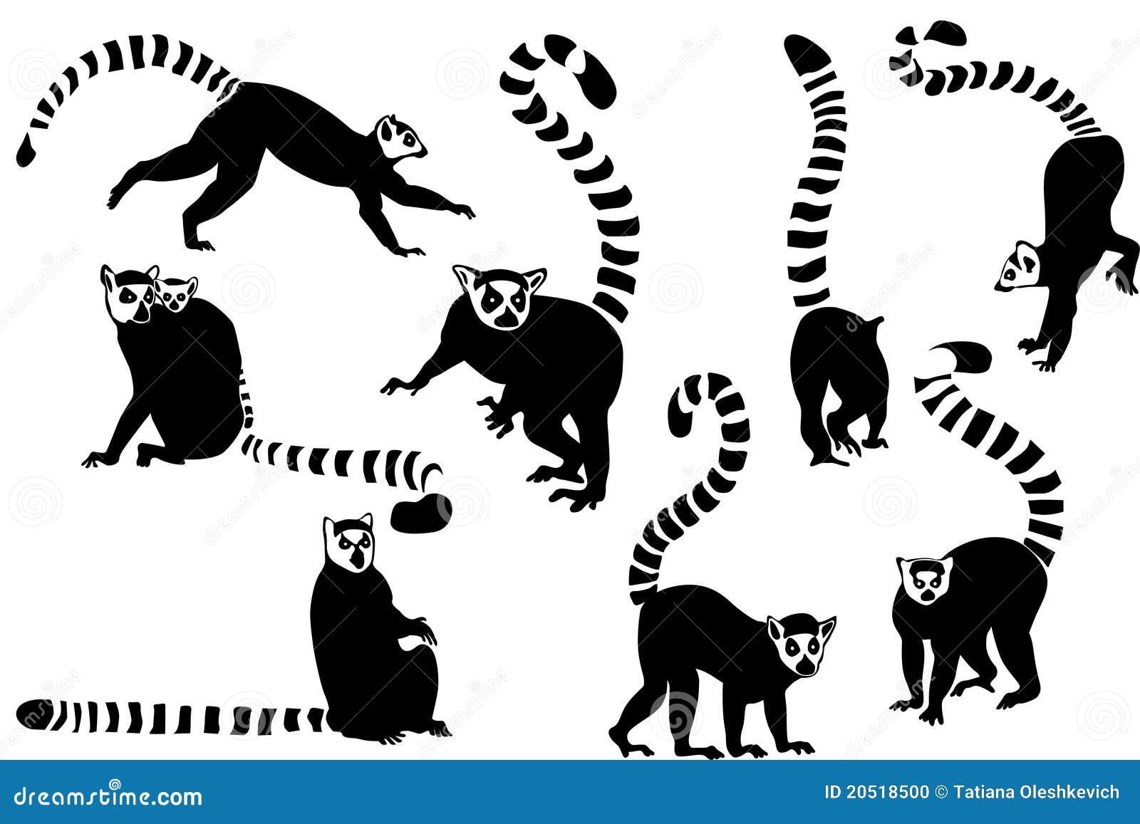 Ring-tailed Lemurs Col...