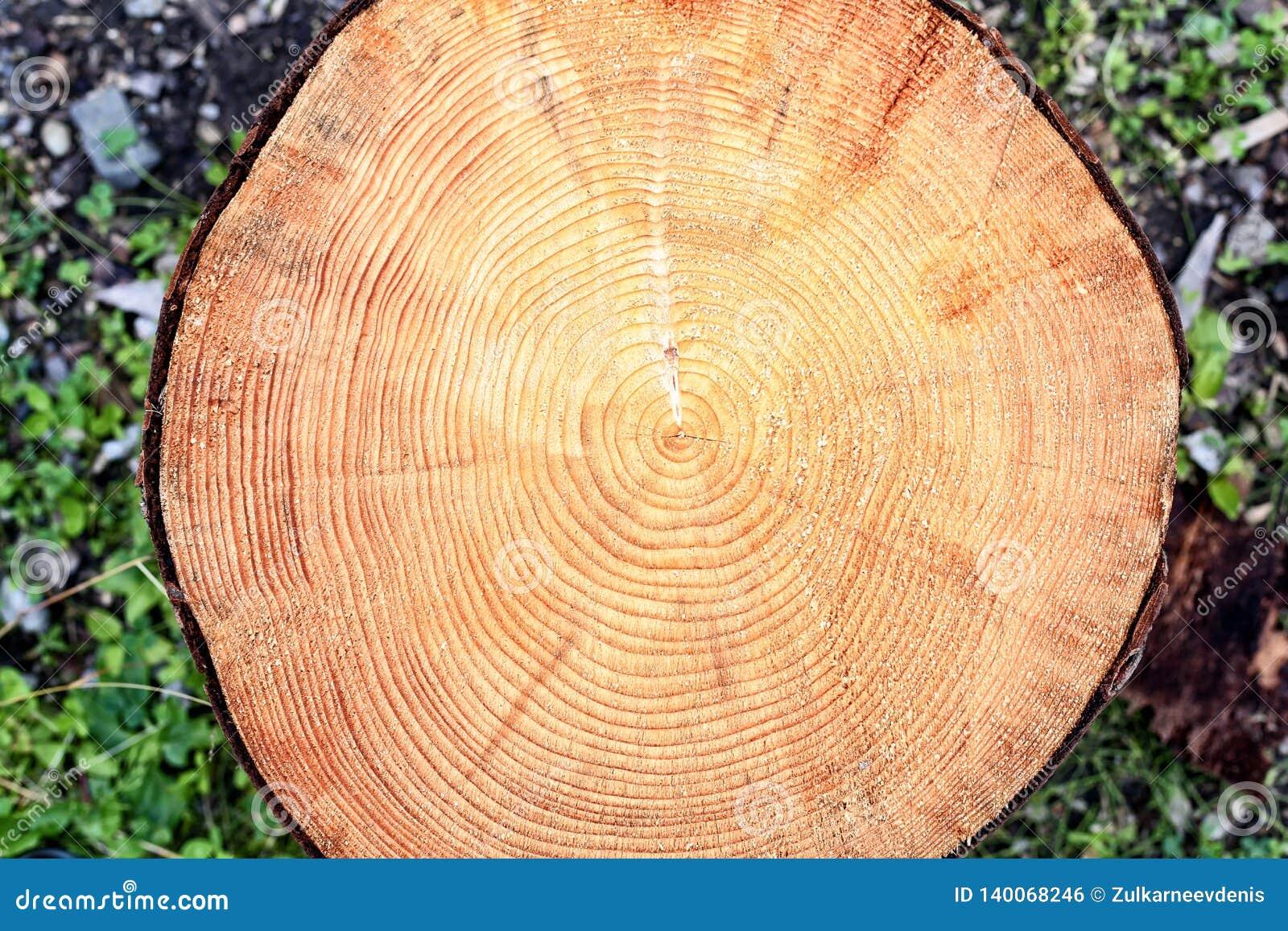 Ringen van een boom in een besnoeiing